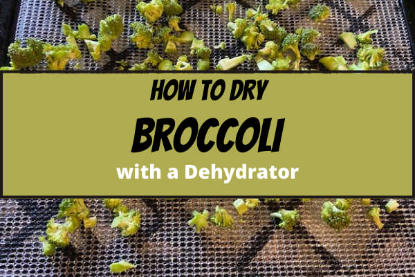 How to Dry Broccoli with a Dehydrator