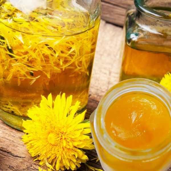 DIY Homemade Dandelion Oil and Salve