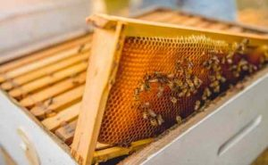 How to Get Rid of Varroa Mites in Your Beehives without Chemicals