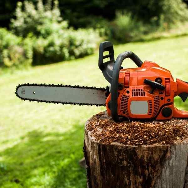 chainsaw on stump