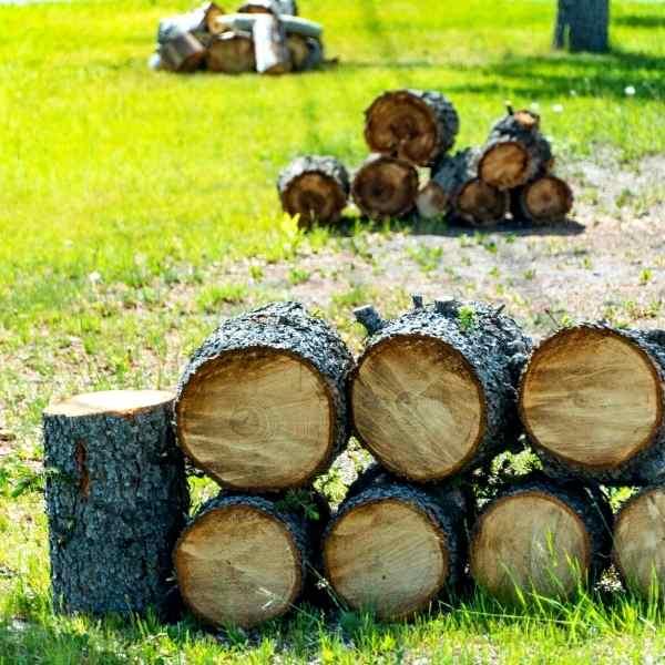 cutting firewood in the fall