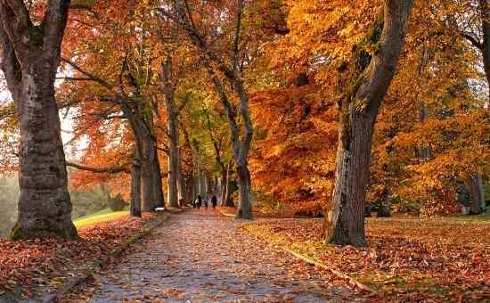 16 fall homesteading chores
