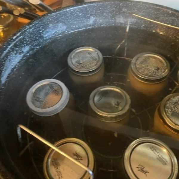 jars of pear sauce in canner